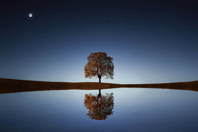 drevo uma